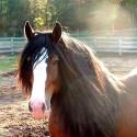*Cowboy Magic ,staart en manen gel,